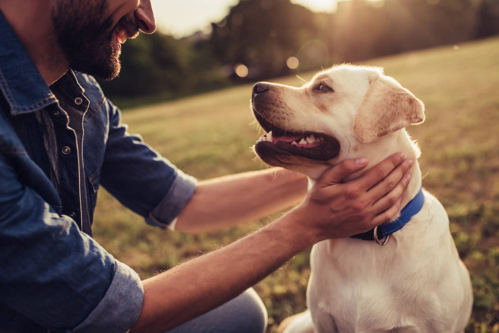 Qué pueden hacer y qué no pueden hacer las mascotas