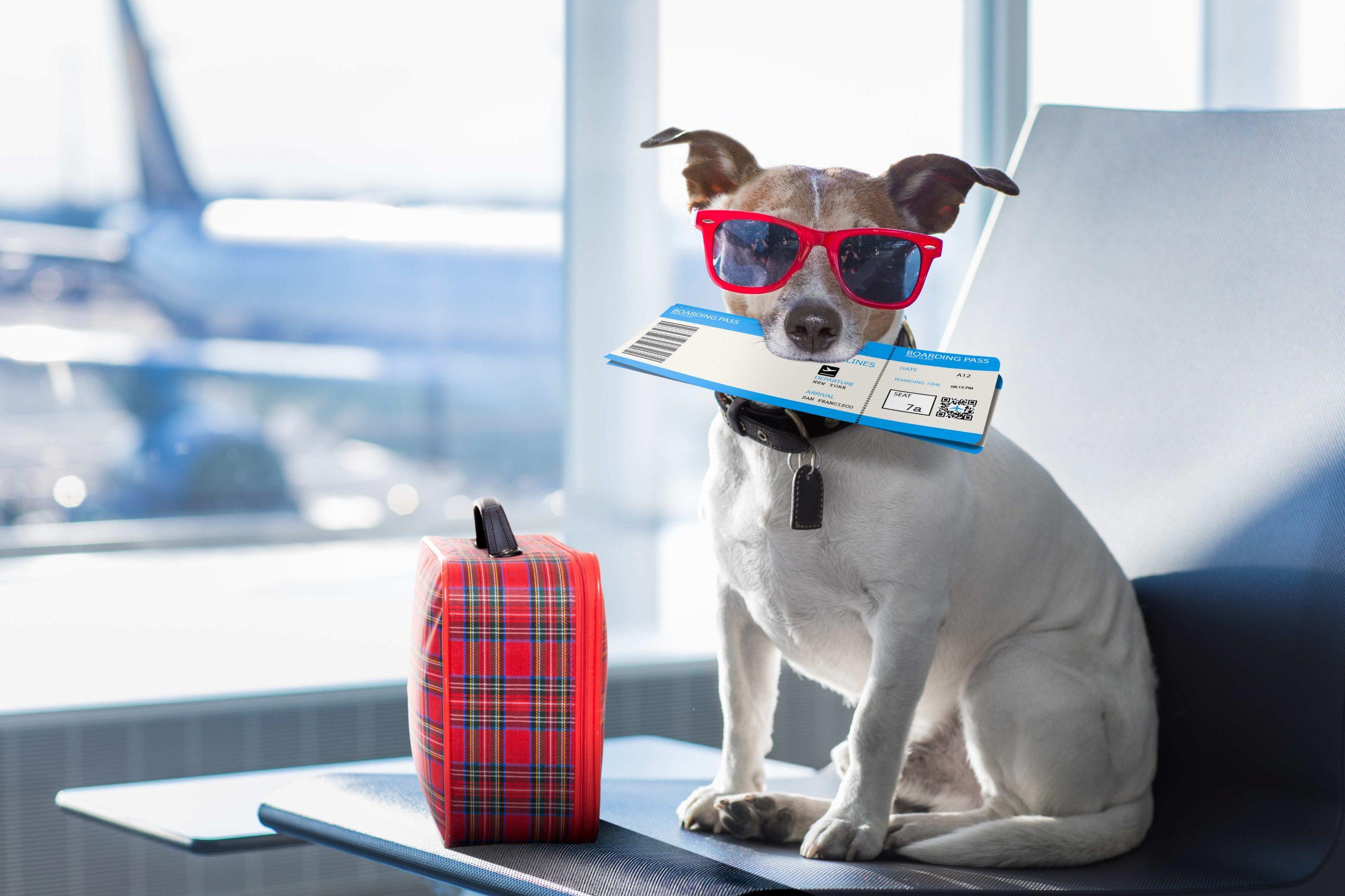Todo lo que debes saber para que tu mascota viaje cómoda y segura